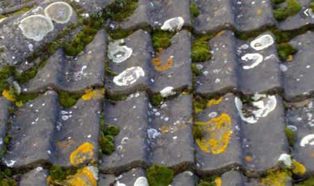 mildew fungi on roof